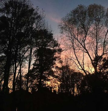 Trees Sunset by Aliza Abusch-Magder