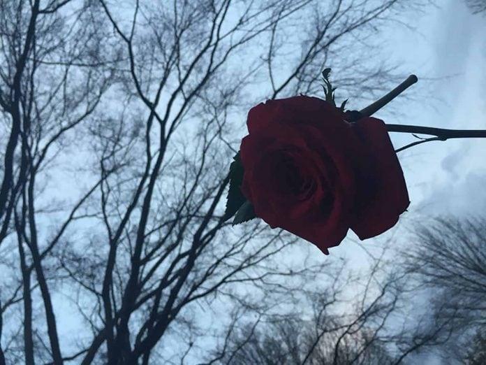 Rose Trees - Aliza Abusch-Magder - jGirls Magazine
