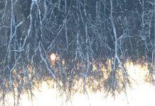 Branches - Liora Meyer