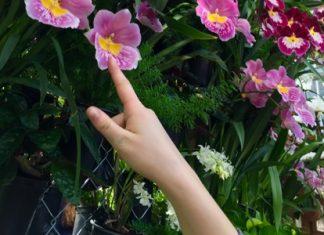 Flowers Hand - Aliza Abusch Magder