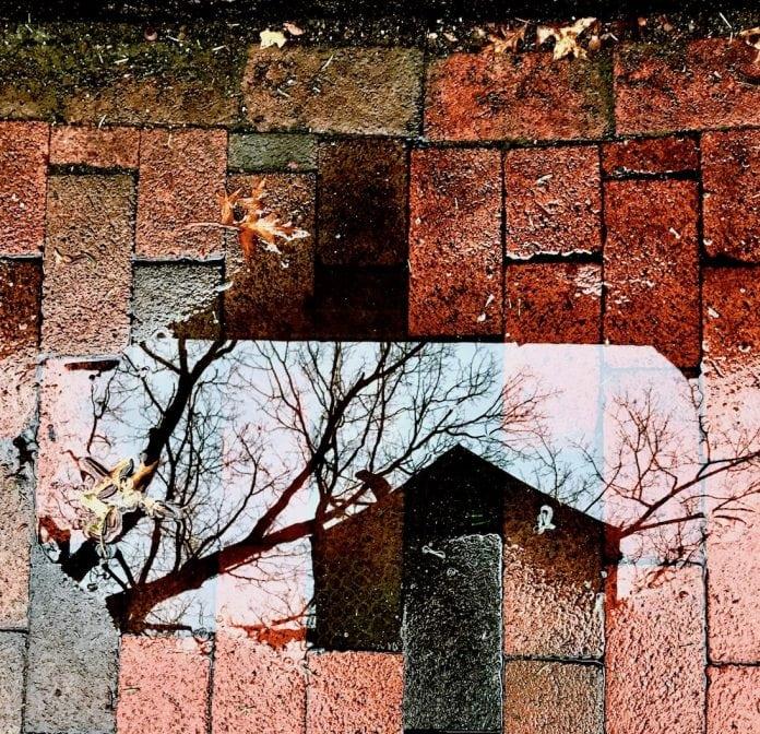 Untitled - Liora Meyer