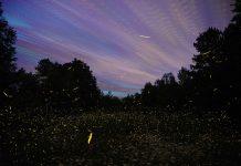 Glow by Gali Davar