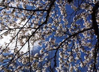 White Flowers - Mollye Oze
