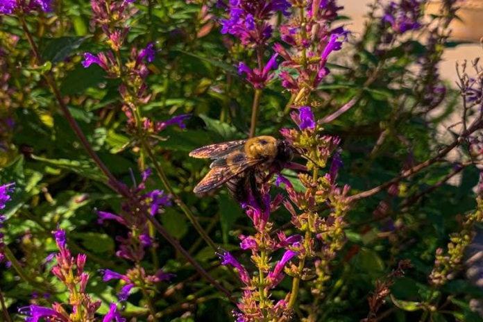 The Night Fay Forgot Bug Spray by Livvy Krakower - Photo by Marika Campbell-Blue