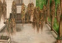Porch Onions by Phoebe Wagoner